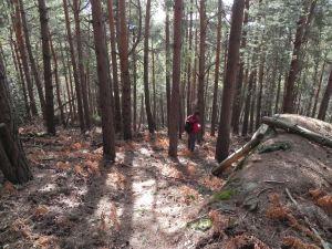 Bajando por el pinar