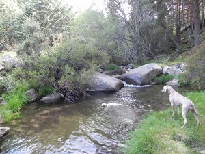 Poza en el arroyo de los Hoyos