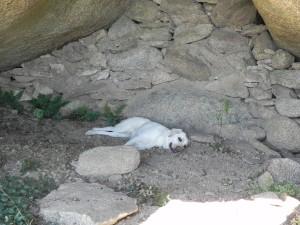 Maia descansando en la cueva